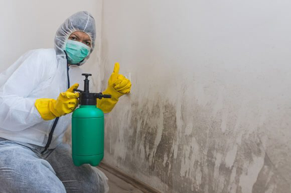 Mold Intervention and Removal