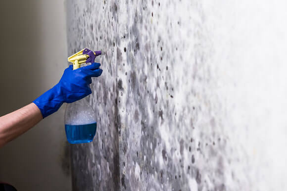 Mold Remediation in Thorton, CO