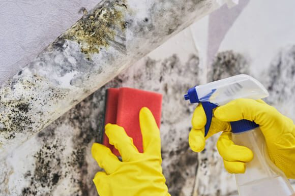We Can Prevent Mold Growth